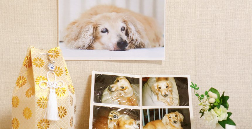 Pet cremation can be just as caring and supportive as that of any human. A memorial service for a departed golden retriever.